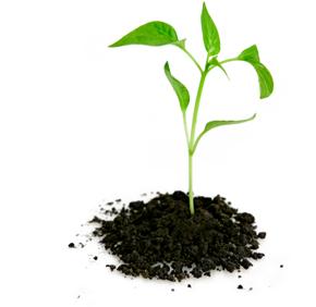 SQLAuthority News - How to Avoid Procrastination - Professional Development #001 - Video smallplant